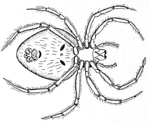 dessin de araignee