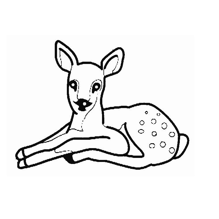 dessin de biche - Les dessins et coloriage