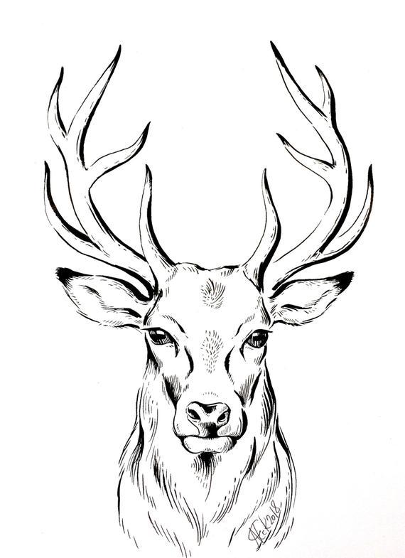dessin de cerf