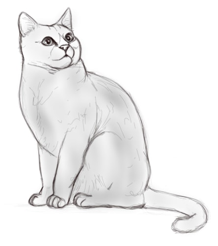 dessin de chat a dessiner