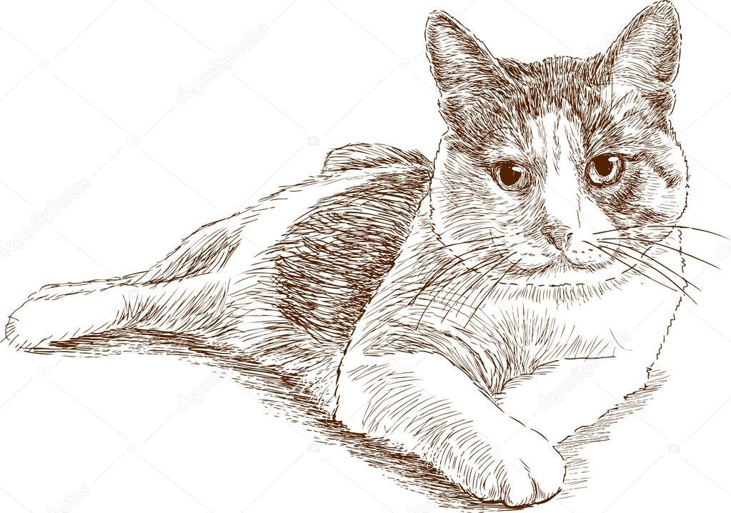 dessin de chat allonge