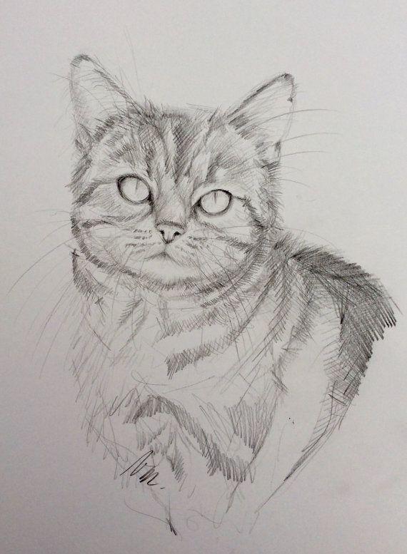 dessin de chat au crayon