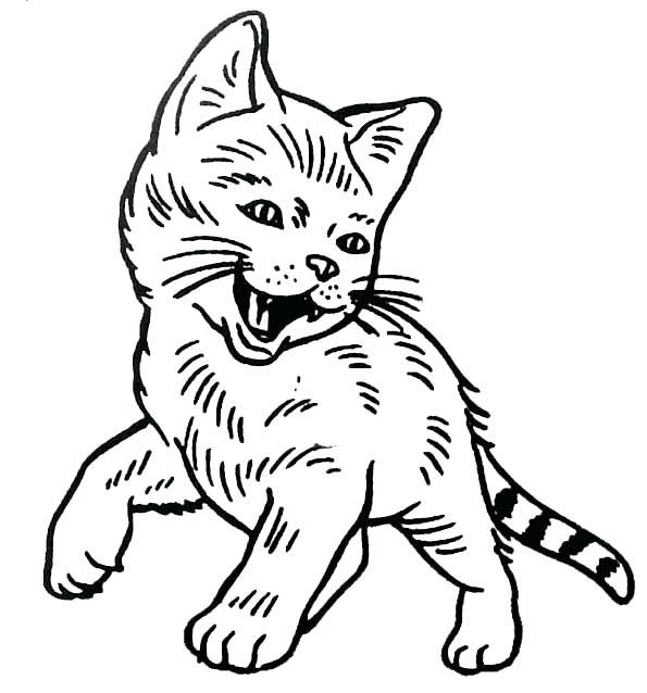 dessin de chat bebe