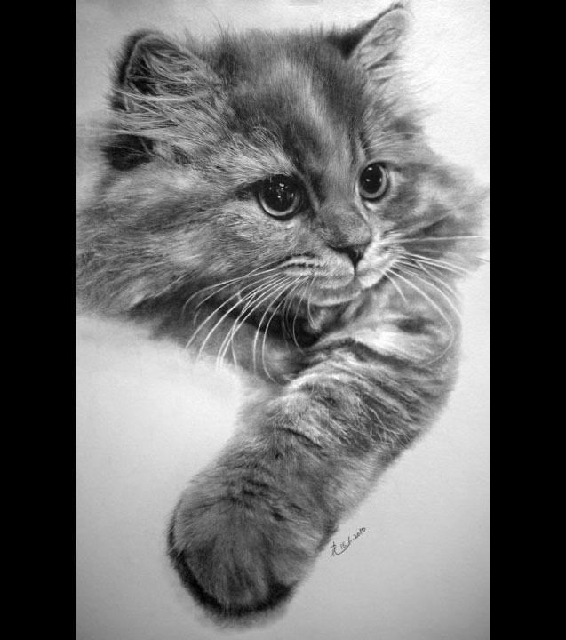 dessin de chat difficile