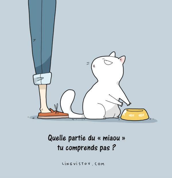 dessin de chat drole