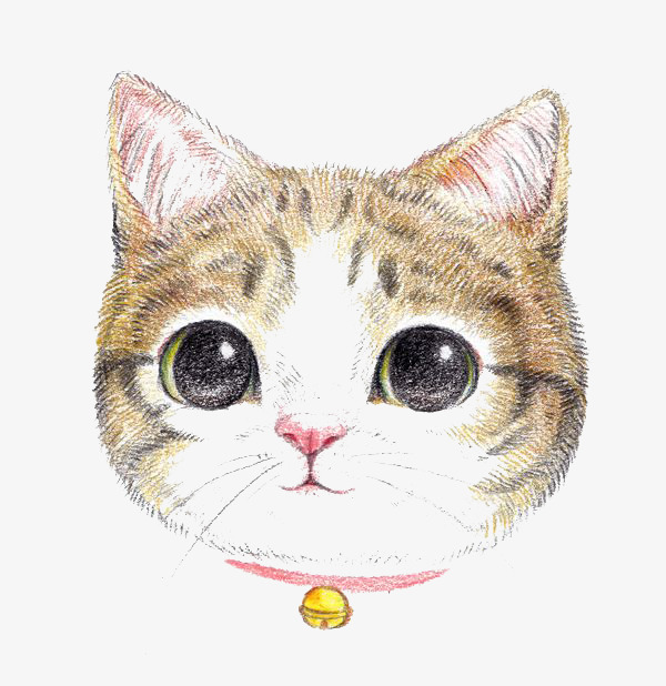 dessin de chat en couleur