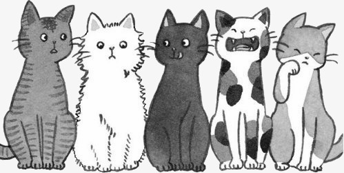 dessin de chat fait a la main