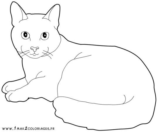 dessin de chat mignon a imprimer , Les dessins et coloriage