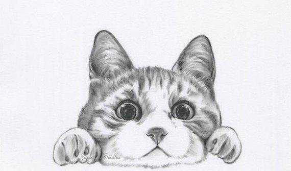 dessin de chat original