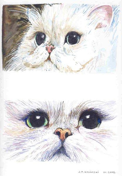 dessin de chat persan
