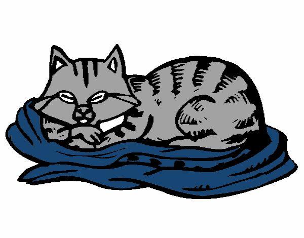 dessin de chat qui lit