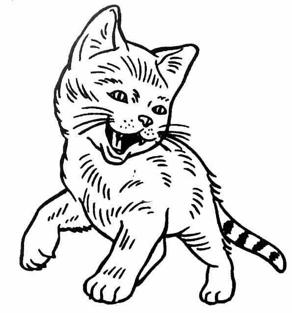 dessin de chat qui miaule
