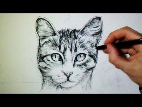 dessin de chat realiste