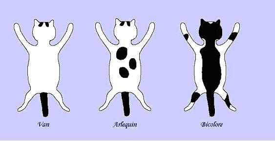 dessin de chat roux