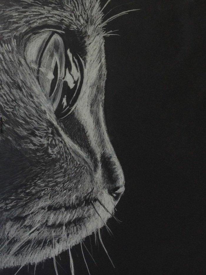 dessin de chat sur fond noir