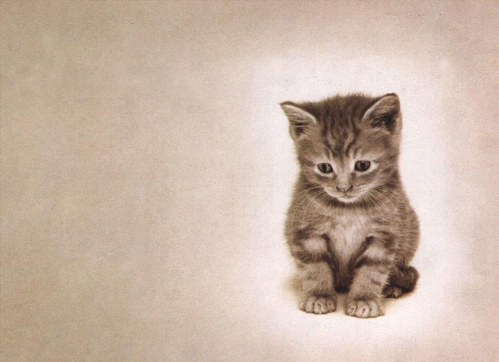 dessin de chat triste