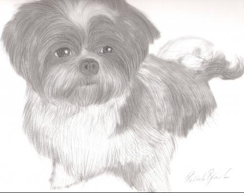 dessin de chien au fusain
