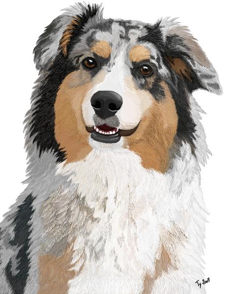 dessin de chien berger australien - Les dessins et coloriage