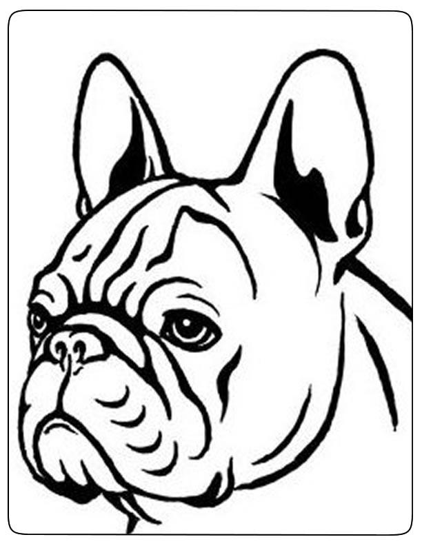 dessin de chien bouledogue