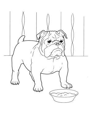 Coloriage Bouledogue Anglais.Dessin De Chien Bulldog Les Dessins Et Coloriage