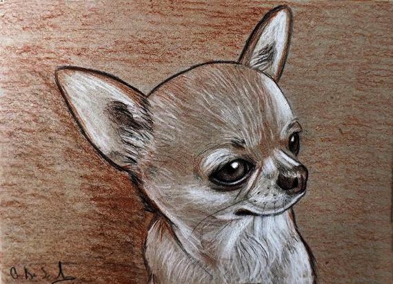 dessin de chien chihuahua