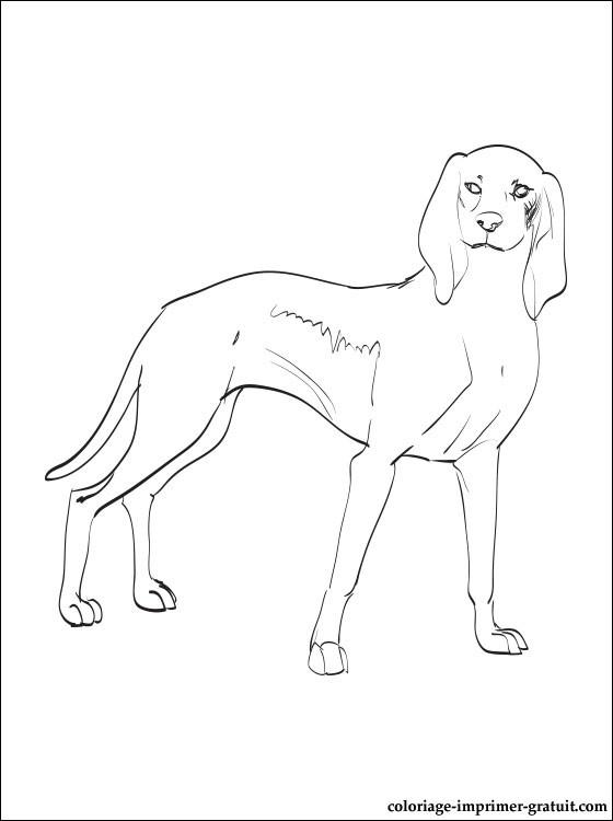 dessin de chien courant