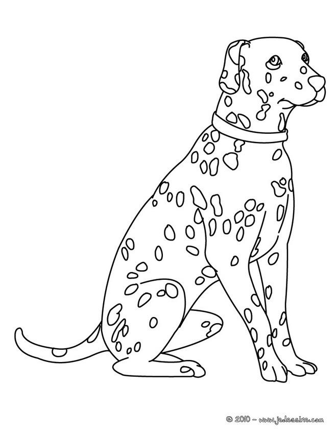 Coloriage Chien A Taches.Dessin De Chien Dalmatien Facile Les Dessins Et Coloriage