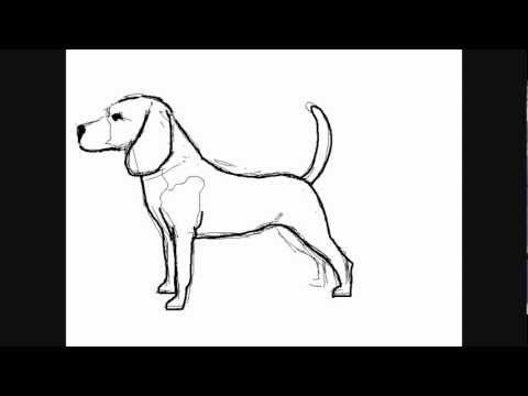 dessin de chien de chasse facile