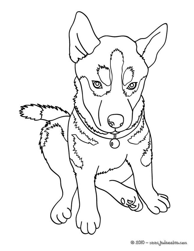 dessin de chien de traineau facile - Les dessins et coloriage