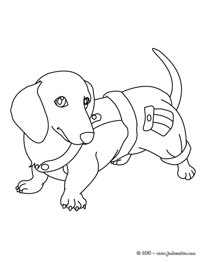 dessin de chien deja colorier