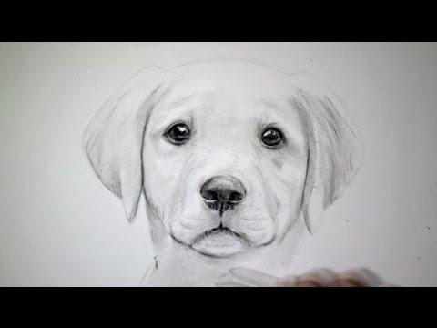 dessin de chien difficile