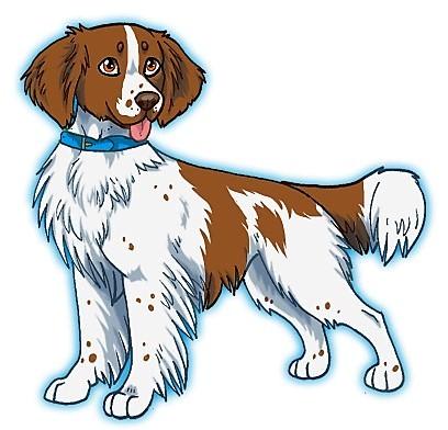 dessin de chien epagneul breton