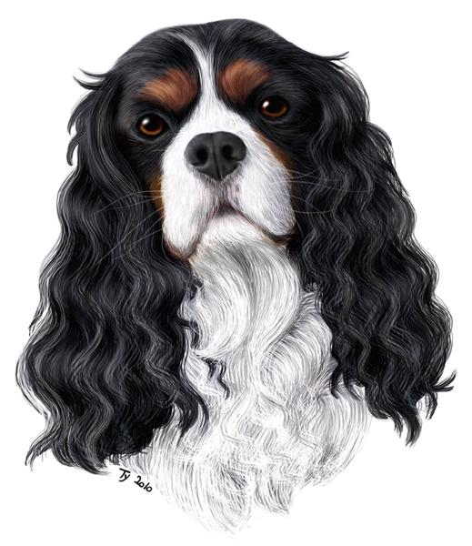 dessin de chien king charles
