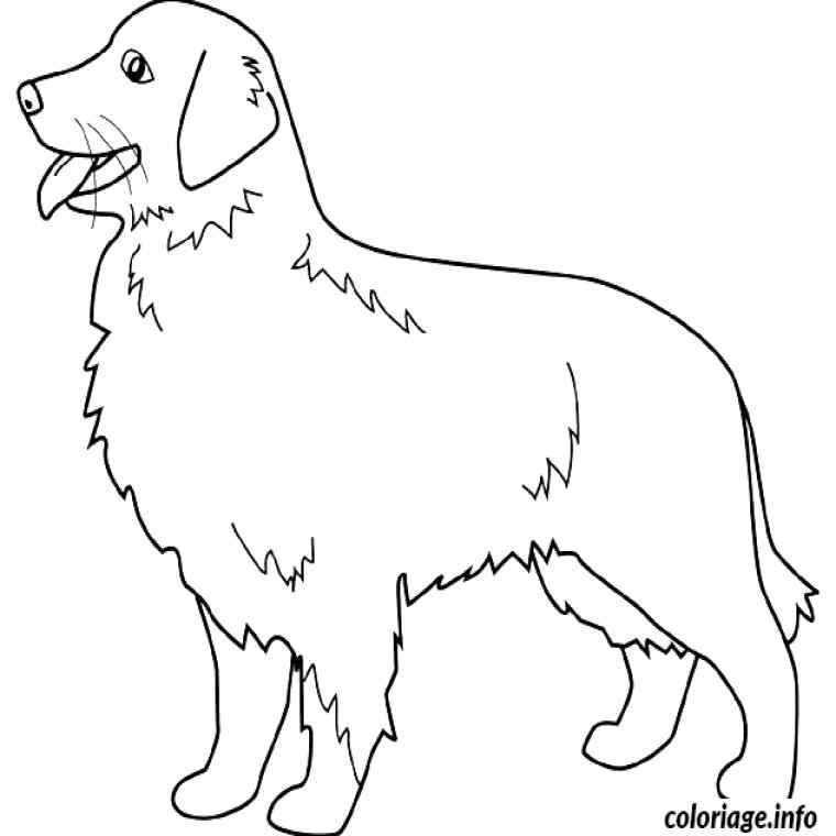 Dessin De Chien Labrador A Imprimer Les Dessins Et Coloriage