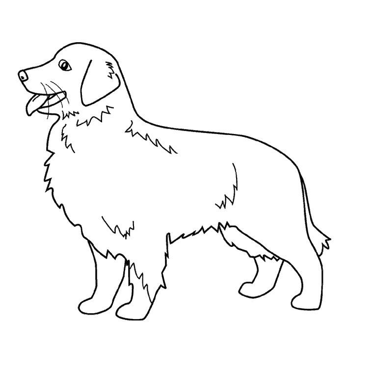dessin de chien labrador noir