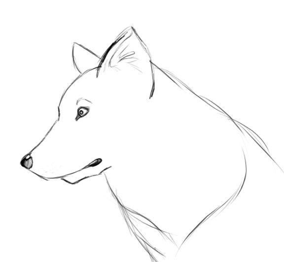 dessin de chien loup
