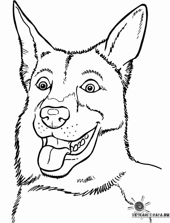 dessin de chien moyen