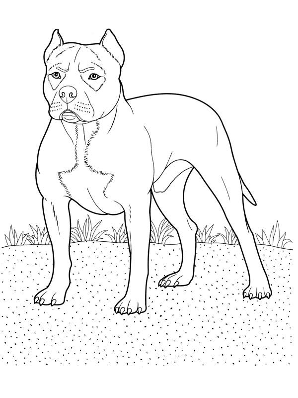 dessin de chien pitbull a imprimer