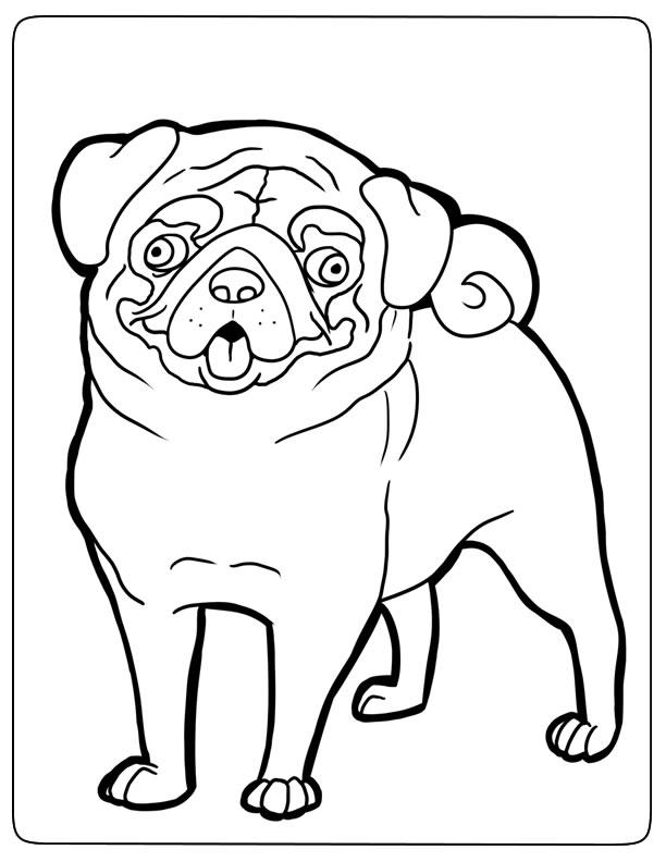 dessin de chien pug