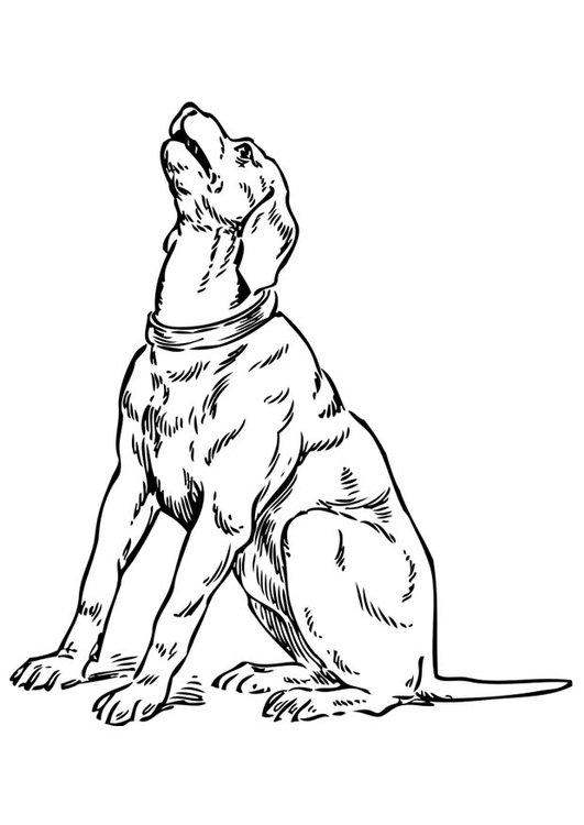 dessin de chien qui aboie