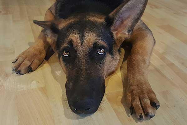dessin de chien qui fait pipi