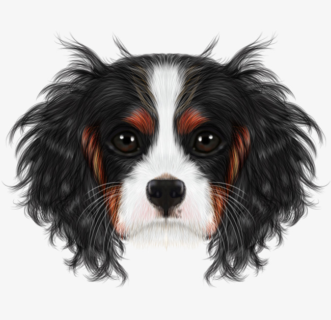 dessin de chien realiste