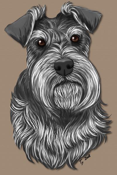 dessin de chien schnauzer