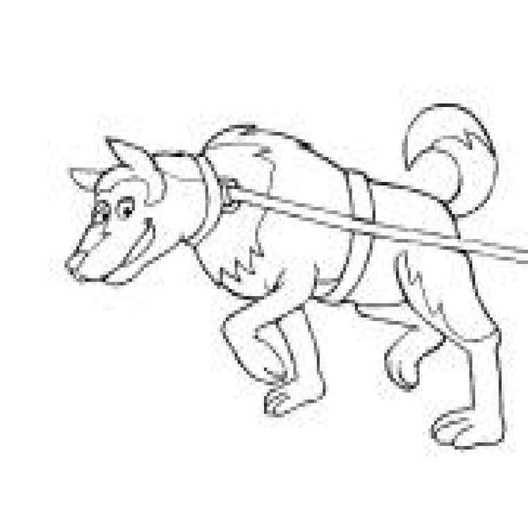 dessin de chien yorkshire a colorier
