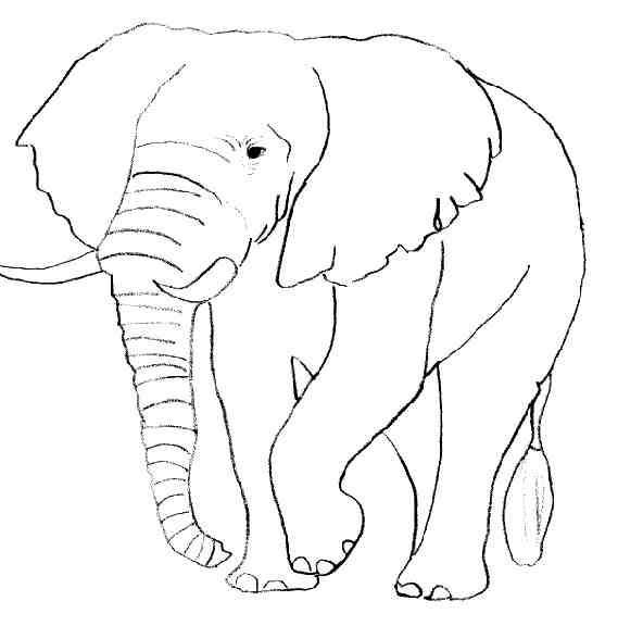 dessin de elephant
