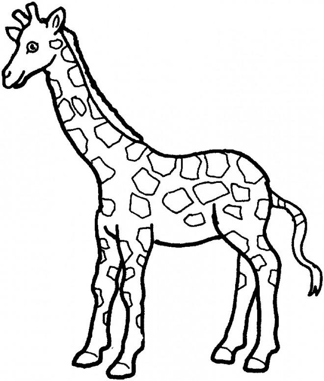 Dessin De Girafe Les Dessins Et Coloriage
