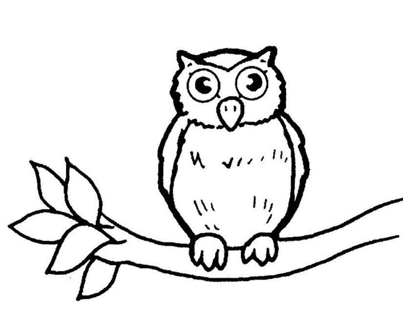 dessin de hibou - Les dessins et coloriage