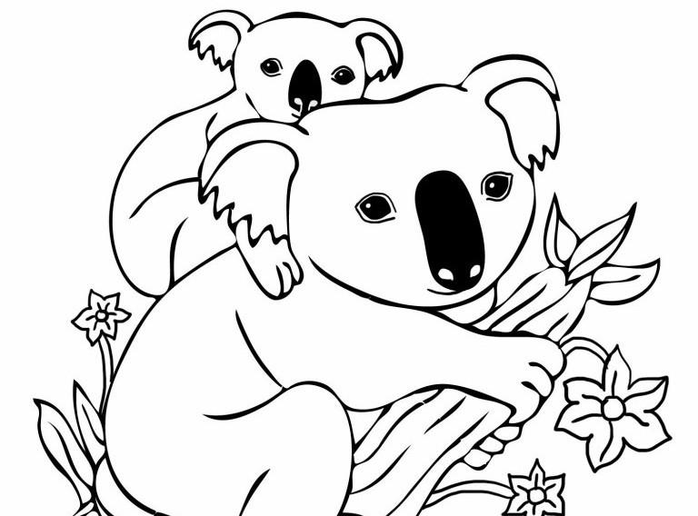 Dessin De Koala Les Dessins Et Coloriage