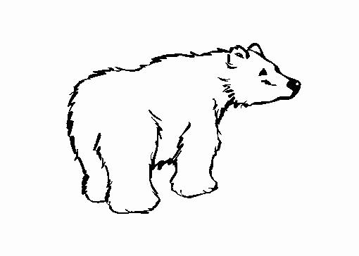 dessin de ours - Les dessins et coloriage