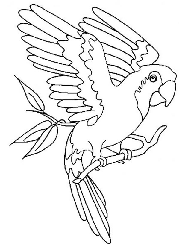 dessin de perroquet